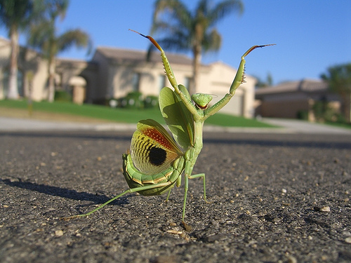 This Mantis knows how to PAR-TAY!